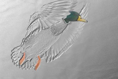 Flying Duck + Effects