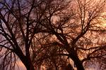 """Branching Out at Sunset by James """"BO"""" Insogna"""