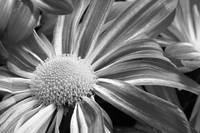 Flower Flow Black and White