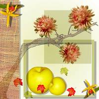 Chrysanthemums and apples on a background of branc