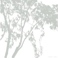 Acer Palmatum, 2:00 by John McConnico