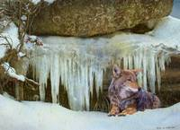 cold refuge / coyote