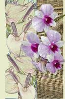 Orchids on a grid