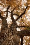 """Big Tree by James """"BO"""" Insogna"""