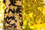 """Aspen Carvings by James """"BO"""" Insogna"""