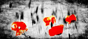 Textured Tulips red black and white