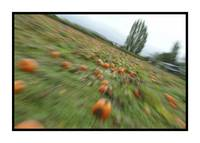 Zoomin' through the Pumpkin Patch