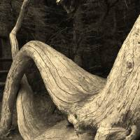 dragonwood Art Prints & Posters by Evan Ogden