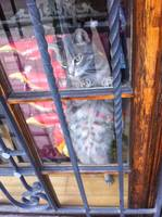 Playful Cat in a Store Window
