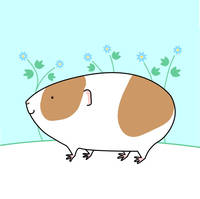 Forget-me-not Guinea-pig