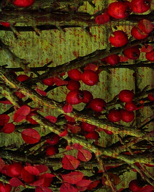 Winter Berries 2