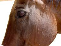 eye to eye with a horse