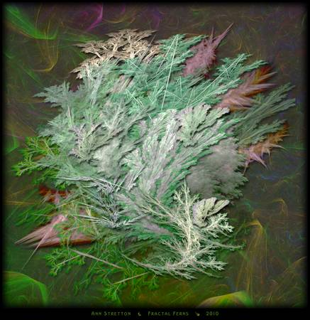 Fractal Ferns by Ann Stretton
