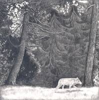 Secrets of the Woods . Wolf