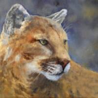 """Cougar"" by SandCreekVentures"