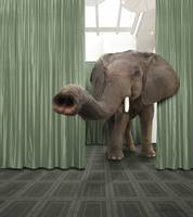 Elephant Behind The Curtain