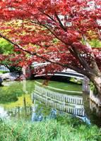 Springtime Bridge by Carol Groenen