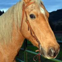 Dusty a Gelding by Laura Mountainspring