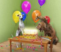 Birthday dogs fiery cake surprise party bloodhound