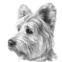 West Highland White Terrier (Westie)