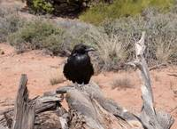Bird-on-dead-tree-in-Canyonlands