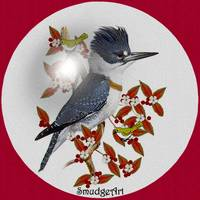 #0390 Belted Kingfisher