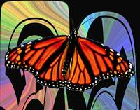 Color My World with Butterflies Wall Art