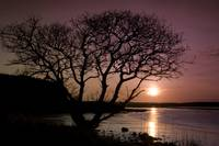 Purple sunset with tree and lake