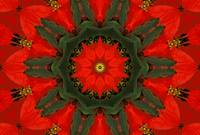Red Poinsettia Mandala - 1