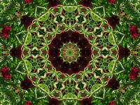 Burgundy Green Mandala 2