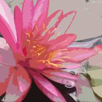 Pink Waterlily #1 Art Prints & Posters by Katherine Tyrrell