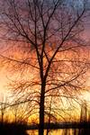 """December 16th Sunrise by James """"BO"""" Insogna"""