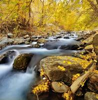 american fork river 2010 autumn yellow leaves 5 cr