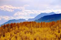 wasatch mountain state park aspens