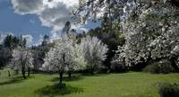 Historical Monroe Orchard in Spring