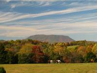 Fall on House Mountain with horses in field