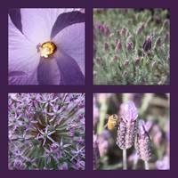 Purple Flowers Collage by Carol Groenen