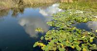 Cloud reflections with water lillies