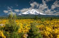 Mount Shasta In Spring