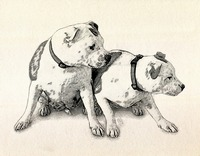 Two Bull Terriers