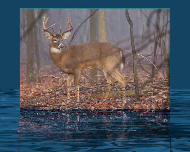 Morning Buck with Effects