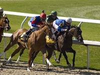 Thoroughbred Horse Race - Last Leg    8786