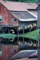 Boat Shed Reflection, Hammer Slough, Petersburg, A