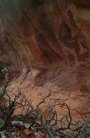 Sandstone Cliff and Old Tree, Arches