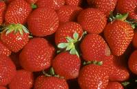 Red, Red Strawberries