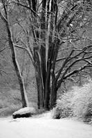 Fresh Snow on Riverbank Tree by Carol Groenen