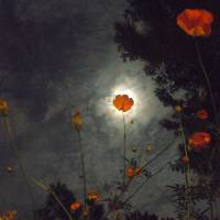 Full Moon with Gold Cosmos Flowers 1 Art Prints & Posters by Shane Wells