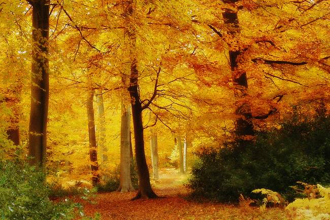 Golden Woodland