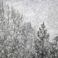 Snow Squawl by Laura Mountainspring
