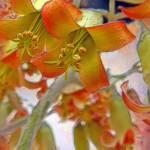 Cactus Flower by Deanne Flouton